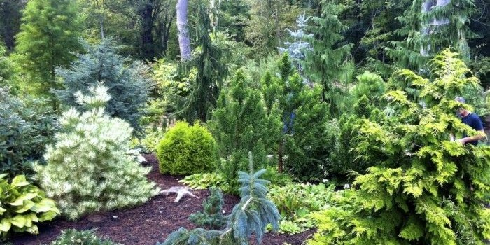 Wednesday, June 22, 9:00 am – 4:00 pm – Private Conifer Gardens of Metro-West Boston