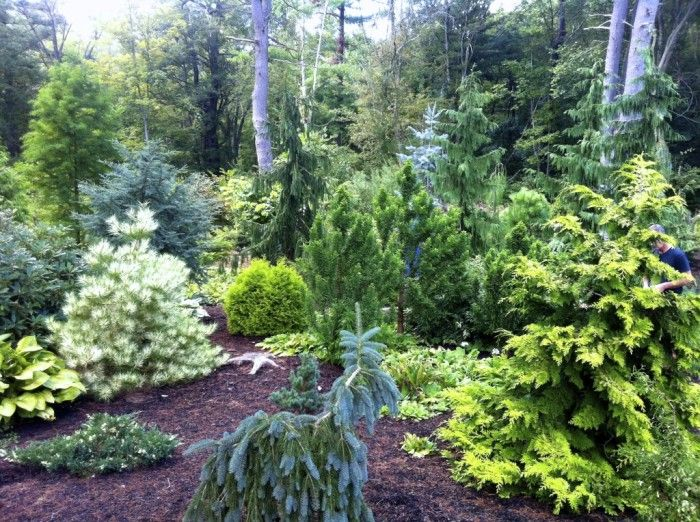 American conifer society the garden club of the back bay for Wellesley college botanic gardens