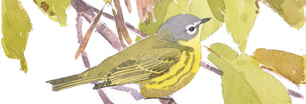 Saturdays, June 4 & June 11, 10:00 am – 2:00 pm – Awash in Birds and Blossoms: Nature Drawing & Painting