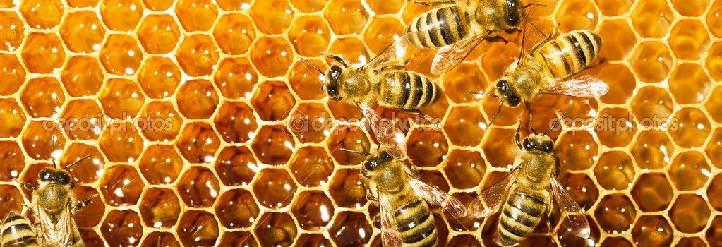 Saturday, August 27, 10:00 am – 5:00 pm, and Sunday, August 28, 10:00 am – 4:00 pm – Bee Weekend