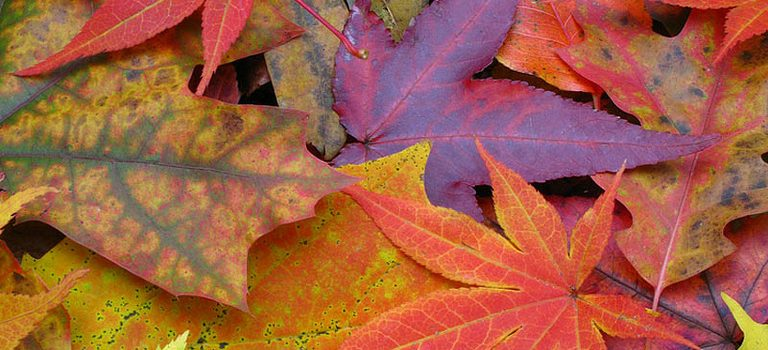 Tuesday, October 25, 3:30 pm – 5:00 pm – Color in the Collections: Fall Foliage Walk